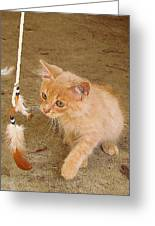 Play Time With Kitty Greeting Card
