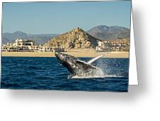Playa Grande - Cabo San Lucas Greeting Card