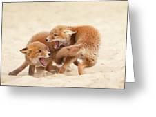 Playfighting Red Fox Kits Greeting Card