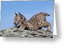Playful Bobcat Kitten Greeting Card