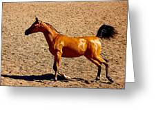 Playful Canter Greeting Card