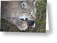 Playful Lynx Greeting Card