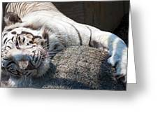 Playful Tiger Greeting Card