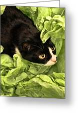 Playful Tuxedo Kitty In Green Tissue Paper Greeting Card