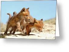 Playing Fox Kits Greeting Card