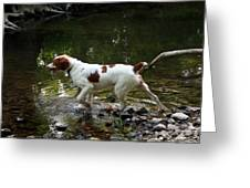 Playing In The Creek Greeting Card