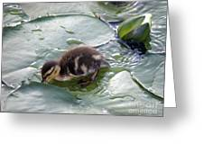 Playing In The Water Greeting Card