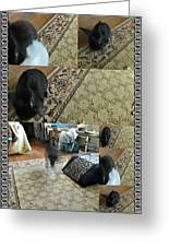 Playtime With Bunny Greeting Card