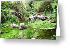 Pleasant Nature Greeting Card
