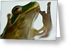 Please Not In A Frogs Eye Greeting Card
