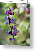 Pleasing Purple Plant Picture Greeting Card