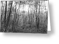 Pleasure Of Pathless Woods Bw Greeting Card