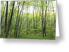 Pleasure Of Pathless Woods - Nat Greeting Card