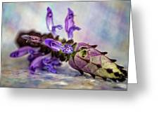 Plectranthus On Show Greeting Card