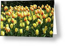 Plenty Of Tulips Greeting Card