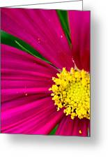 Plink Flower Closeup Greeting Card