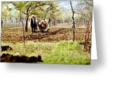 Ploughing In The Orchard Greeting Card