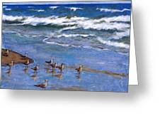 Plover Dance Greeting Card