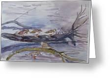 plovers in Jost VanDyke Greeting Card
