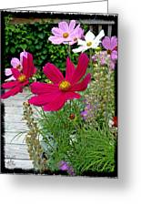 Pluckin Beauties Greeting Card