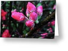 Plum Blossom 1 Greeting Card