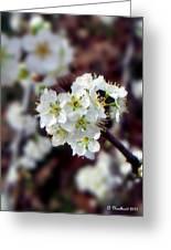 Plum Tree Blossoms II Greeting Card