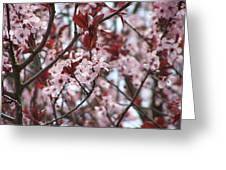Plum Tree In Bloom Greeting Card