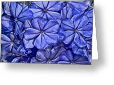 Plumbago Greeting Card