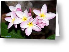 Plumeria 1 Greeting Card