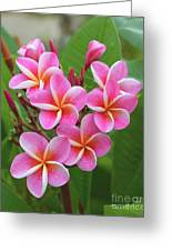 Plumeria After The Rain II Greeting Card