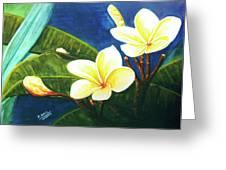 Plumeria Flower # 140 Greeting Card