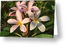 Plumeria Heaven Greeting Card by LeeAnn Kendall