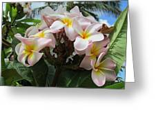 Plumeria In Pink 3 Greeting Card