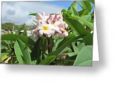 Plumeria In Pink Greeting Card