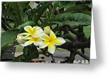 Plumeria In Yellow 2 Greeting Card