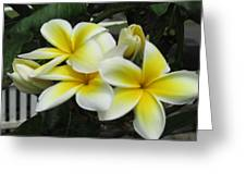Plumeria In Yellow 3 Greeting Card