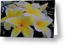 Plumeria In Yellow 4 Greeting Card