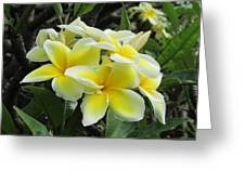 Plumeria In Yellow  5 Greeting Card