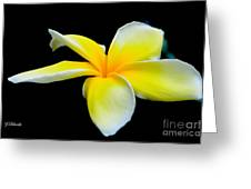 Plumeria In Yellow Greeting Card