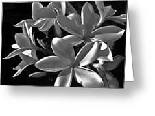 Plumeria Proper Evening Greeting Card
