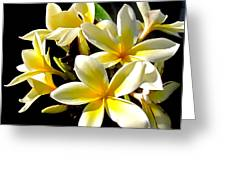 Plumeria Proper Greeting Card