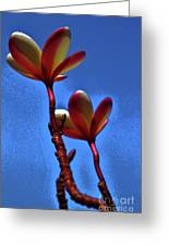 Plumeria Two Greeting Card