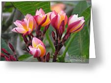 Plumeria With Style  Greeting Card