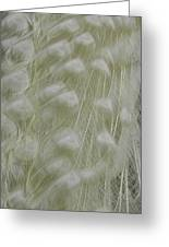 Plumes Of Snow Greeting Card