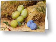 Plums And A Rose Hip On A Mossy Bank Greeting Card
