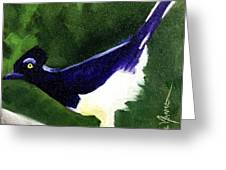 Plush Crested Jay Greeting Card