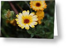 Pocket Full Of Sunshine Greeting Card