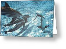 Pod Of Dolphins Greeting Card