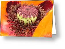 Pod Poppy Greeting Card