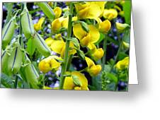 Pods And Blooms Greeting Card